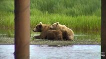 BEARCAM WEEK IN REVIEW PHILLYDUDE 2020.06.29 03.07 PIC ONLY 14 94 w HER 2.5 YO CUBS BETWEEN 2020.06.22 - 2020.06.28