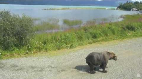 410 on 07 25 2016 - I think we have a Bear's opinion on the rising water level video by Brenda D