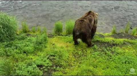 83 at Falls 11 47am 6-20-16 Katmai National Park and Explore video by Mickey Williams