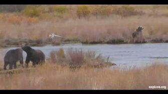 Miscelaneous Bears 1 10 4 2013 11 01 28 AM 1 by Linda Jett
