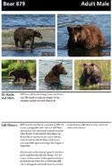 879 INFO 2014 BoBr PAGE 30