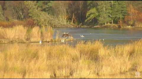 10 12am 9.30.16 83 Wayne brother and 879 eating fish in lower river video by Mickey Williams