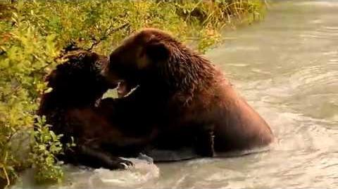 Alaska 2017 video by Vrishab Kakade
