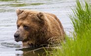INFO BEARS SEEN 2017.06.21 APPROX 10.54 410 RDAVE COMMENT 2017.06.21 11.09 PIC 02 ONLY ZOOM