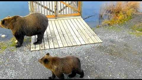 Mom 402 & Cubs 2015 10 05 by Victoria White-0