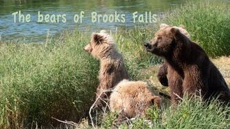 The Bears of Brooks Falls, video by Marvin Neitzert, late June 2019