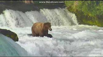 274 Overflow bear at the falls 6 25 18 by Ratna Narayan