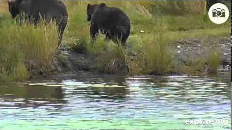 09-05-2014 3 bears LowerRiver Cam