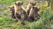 402 PIC 2018.10.08 4 SPRING CUBS JEGRABAU POSTED 2019.10.19 02
