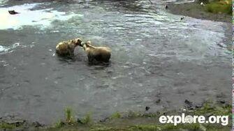 Beary Ornery Bears July 17, 2014 by JB Grace