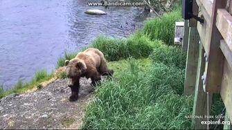 Mystery Bear 1 2019-06-21 23-31-27-294 by Birgitt