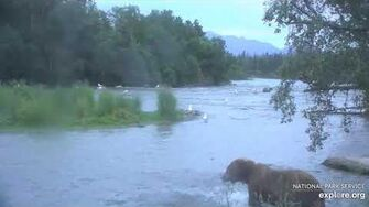??? on falls low cam 7 23 2020, video by Lani H