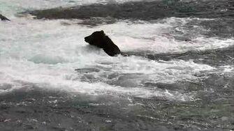 Brooks Falls Brown Bears Cam 06-29-2018 11 31 21 - 12 31 22 Explore Recorder video