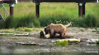 23 Jul 2019 273 Shows Great Patience with Her Tiniest Cub, video by mckate