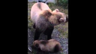 Katmai National Park, video by Octavio Garduno-0