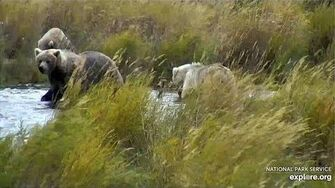26 Sep 2019 The 482s Feast on the Lower River, video by mckate