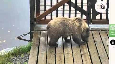 273's spring cub September 15, 2015 video by Juanita Roper (aka BirdyGirly)