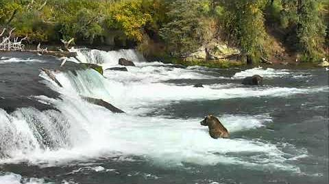 Brooks Falls Brown Bears Cam 09-19-2018 16 00 10 - 16 59 56 Explore Recorder