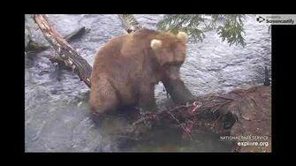 Brown Bear Cam, The Riffles - 10 21 19 by Elle Lynn (aka campfiredavis)-1