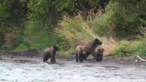 Alaska Bären beim Brooks Camp 2015 video by Helmut Bahr