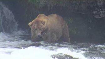 Bear Cam - Brooks Falls Cam 07-16-2017 12 00 08 - 12 59 59 by Explore Recorder