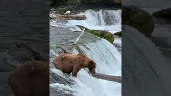 2019 Alaska Nice Bears by Yari Leopold