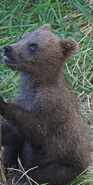 GRAZER 128 PIC 2016.07.16 - 2016.07.21 1 of 3 SPRING CUBS TRUMAN EVERTS POSTED 2016.09.03 08.51