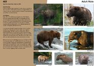 469 page 73 2019 Bears of Brooks River book