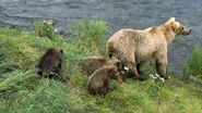 GRAZER 128 PIC 2016.07.08 w 3 SPRING CUBS JEN POSTED 2019.05.12 03