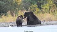 132 PIC 2018.09.14 - 2018.09.17 w REMAINING SPRING CUB RATNA POSTED 2018.06.16 20.53