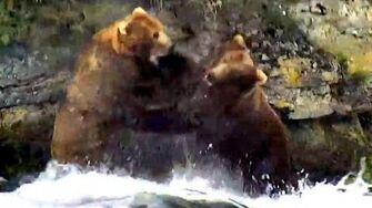 Bears 856 and 755 scuffle at the falls, Katmai Brown Bears,19