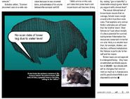 SCANNING THE ROUNDEST BEAR CLAIRE NAPIER ARTICLE 32 151 480 747 854 04