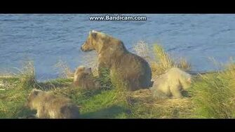 Beautiful sow 482 and 3 cubs ( Smores) P2 28 9 18 by Ratna Narayan