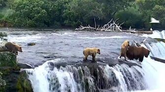 """We'll help you Mom!"" 402 with cubs at Brooks Falls"