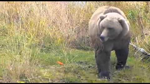 Bear 171 ~ 2015 10 02 video by Victoria White