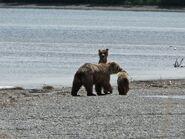 719 and her 2 yearlings June 15, 2020 NPS photo by N. Boak .01