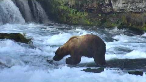 Bear Cam - Brooks Falls Cam 07-04-2017 23 00 07 - 23 59 59 (89 Backpack at approx the 12 20 mark to end)