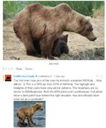 WHO UNIDENTIFIED SOW 2019.07.10 w 2 SPRING CUBS 39 500 MAYBE LOVETHEBEARS POSTED 2020.01.28 08.56 01-03 GOLDILOCKS 2020.01.28 10.08 COMMENT