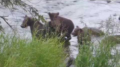 402's cub talking July 14, 2015 by Rockatte