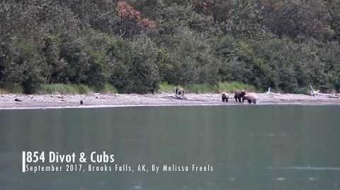 854 Divot and Cubs, September 2017 by Melissa Freels