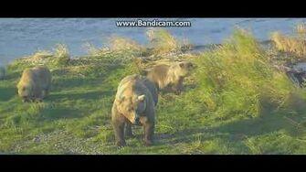 Beautiful sow 482 and 3 cubs ( Smores) P5 28 9 18 by Ratna Narayan