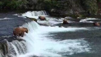 Brooks Falls July 2, 2015 by Nancy Leszczynski 868 Wayne Brother fishing the lip of Brooks Falls