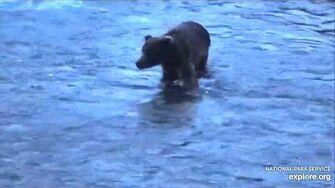 IDK, Late night Bear? June 23, 2020 video by JG