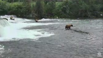 4 05 PM 070216 Overflow 274 fishing at the falls Katmai National Park and Explore by Mickey Williams
