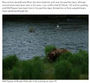 MIKE FITZ COMMENT 2019.06.17 08.15 AFTER EDIT ARE YOU THERE BROWN BEAR iNATURALIST PROJECT 02