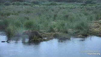 ??? scavenging on the lower river 7 17 2020, video by Lani H