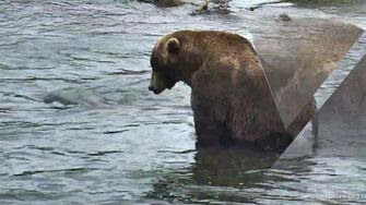 Reflections in Time Katmai, Alaska by GreenRiver (published March 1, 2020)