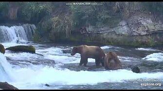 BEARS FIGHTING AT BROOKS FALLS, KATMAI NATIONAL PARK, ALASKA, video by Joni Tilley-0