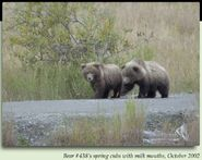 438 FLO PIC 2002.10.xx in 2 of 3 SPRING CUBS w MILK MOUTHS MAYBE 83 & 868 2012 BoBr iBOOK 01