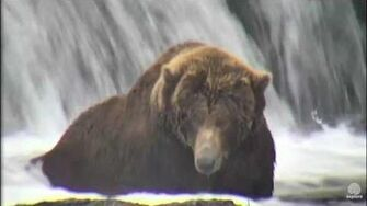 68 on 2016 10 18 Brooks Falls - Katmai National Park by Flyer 7474 (aka SteveCA)
